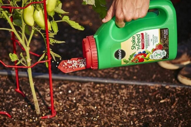 The Best Fertilizer For Peppers Option