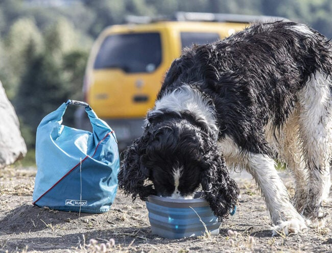 Best Dog Food Storage Options