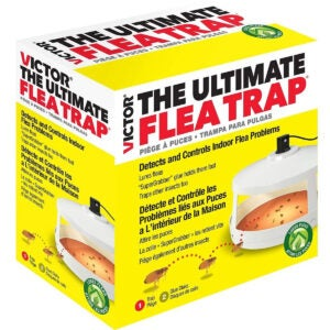 The Best Flea Trap Options: Victor Safer Brand M230A Ultimate Flea Trap