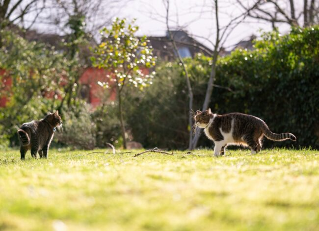 cats-meeting-picture-id1208665438