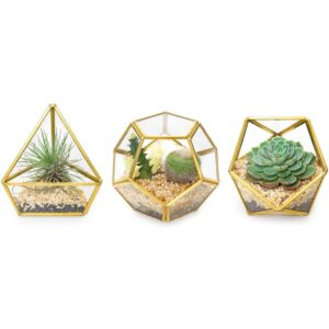 "The Best Terrarium Option: Mkono 4"" Mini Glass Geometric Terrarium"