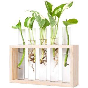 The Best Terrarium Option: Mkono Wall Hanging Glass Planter