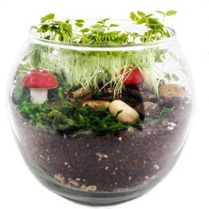 The Best Terrarium Option: TerraGreen Creations Complete Fairy Garden Kit