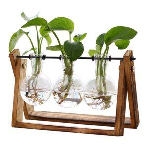 The Best Terrarium Option: XXXFLOWER Plant Terrarium with Wooden Stand