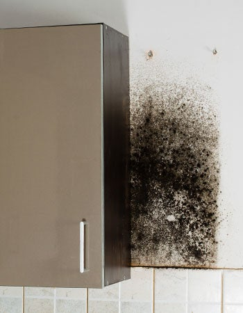 Black Mold as a Black Stain