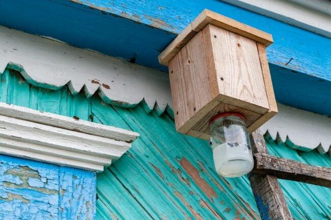 The Best Carpenter Bee Trap Option