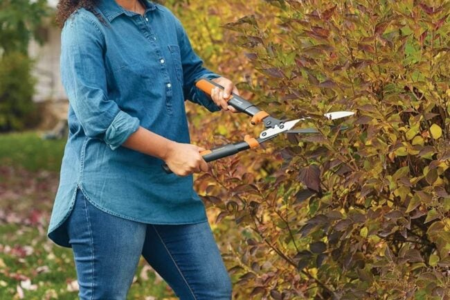 The Best Hedge Shears Option