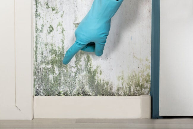 What Should I Do If I Smell Mold in My Home