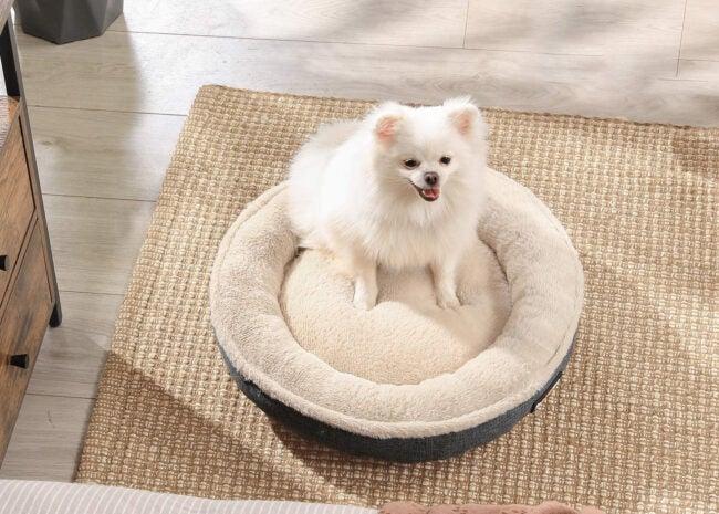 Best Cat Beds Options