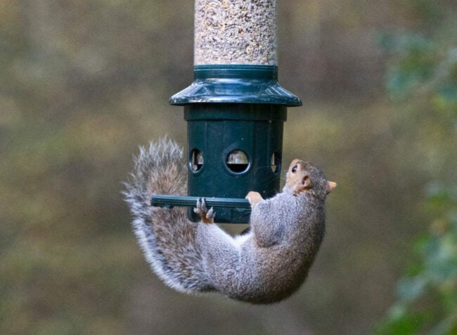 Best Squirrel Proof Bird Feeder Options