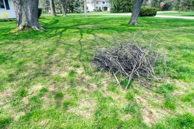 Neat heap of piled up cut tree branches, sticks and twigs waiting on a suburban residential district front yard grass lawn to be gathered up and carried to the back yard fire pit. Late springtime in early May near the city of Rochester in western New York State.