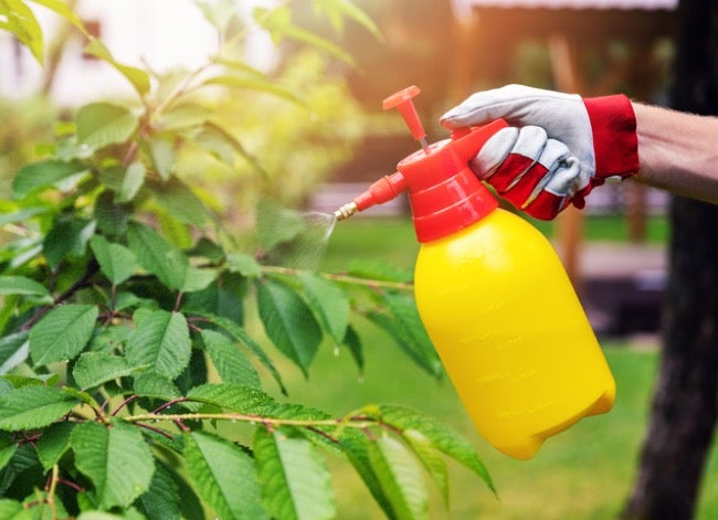 how to get rid of japanese beetles - spray with dish soap solution