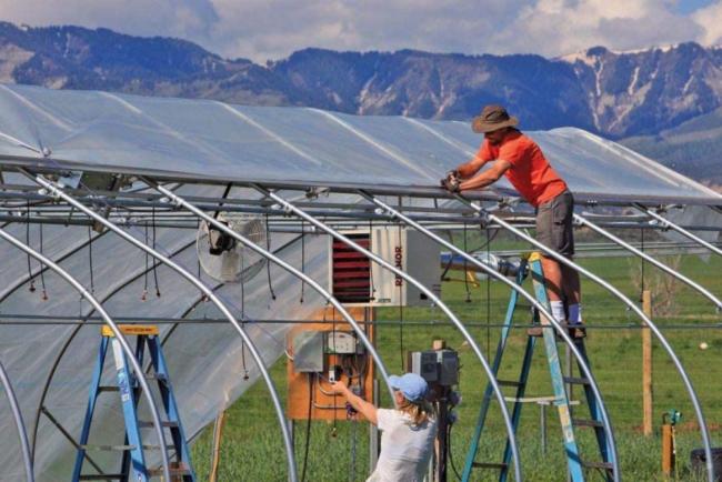 The Best Greenhouse Plastic