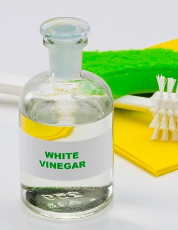 Does Vinegar Kill Mold Vinegar Has Antifungal and Antibacterial Abilities