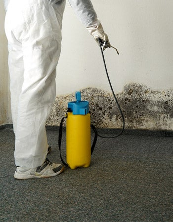 Factors in Calculating Mold Remediation Cost