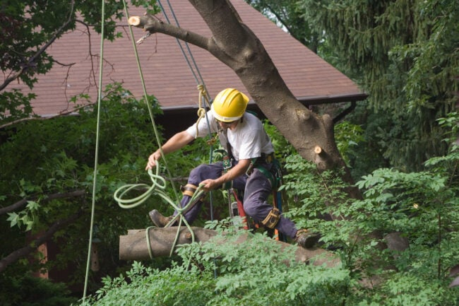 How Much Does It Cost To Remove a Tree DIY vs. Hiring a Professional