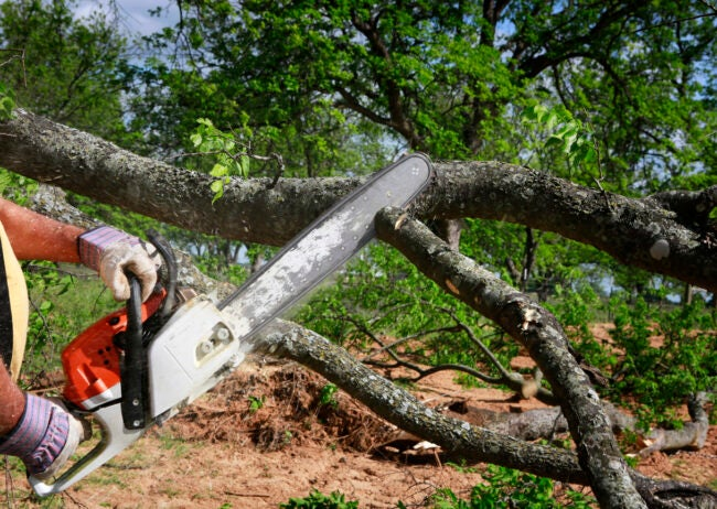 How Much Does It Cost To Remove a Tree FAQs