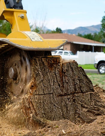 How Much Does It Cost To Remove a Tree Factors in Calculating the Cost