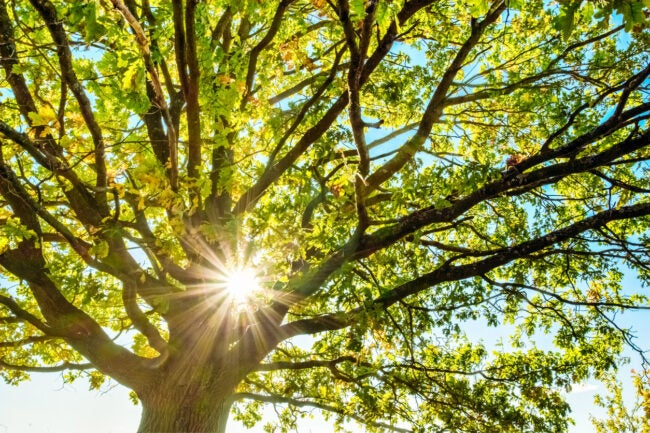 How Much Does It Cost To Remove a Tree Types of Trees
