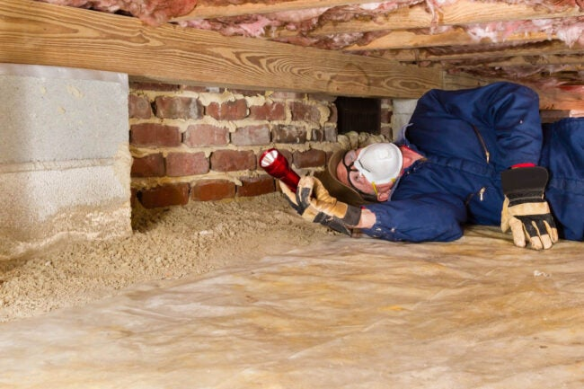 How to Get Rid of Termites Determine Termite Infestation