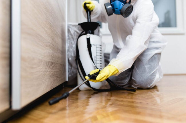 How to Get Rid of Termites Hire a Professional