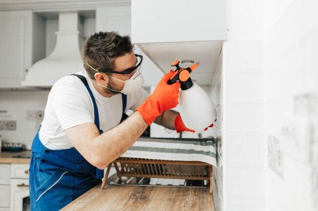 How to Get Rid of Termites Spray Boric Acid on Wood