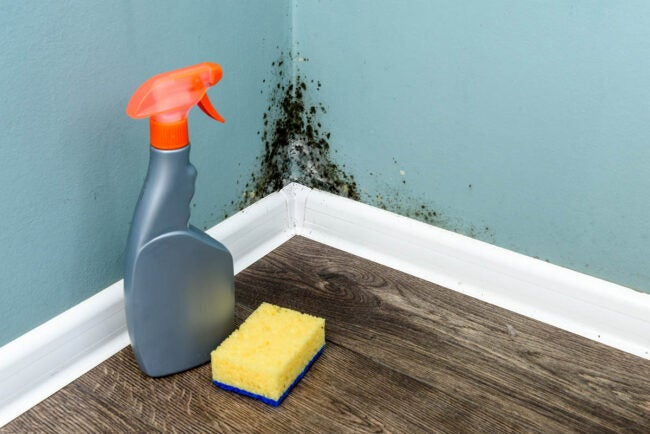 How to Identify Black Mold Create a Plan for Cleaning
