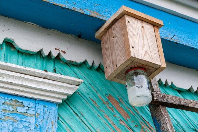 如何制作木匠蜜蜂陷阱
