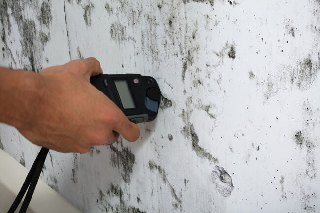 Mold Inspection Cost DIY vs. Hiring a Professional