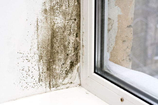 Mold Inspection Cost Signs You May Have Mold
