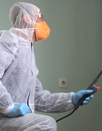 Mold Inspection vs. Mold Testing vs. Mold Remediation