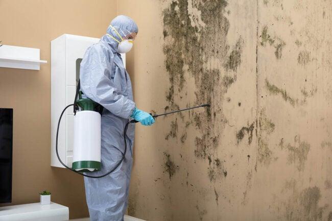 Mold Remediation Cost DIY vs. Hiring a Professional