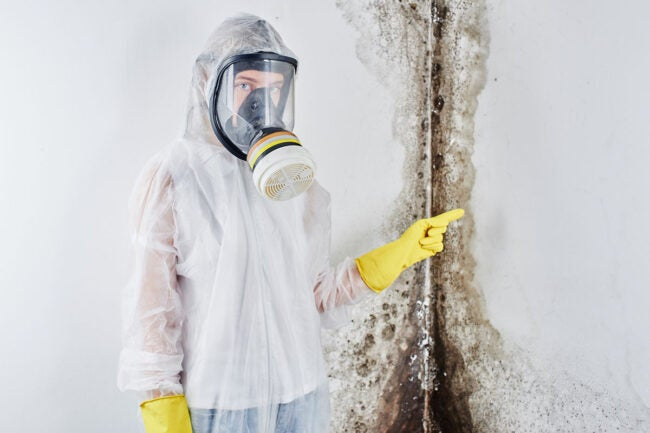 Mold Remediation Cost Questions