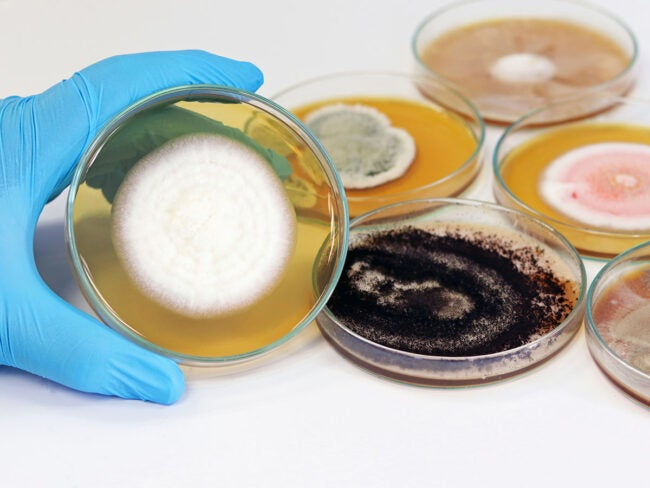 Mold Remediation Cost Types of Mold