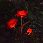 The Best Lawn Ornament Option: Abkshine Rose Flower Outdoor Solar Stake Lights