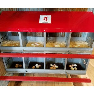 The Best Nest Box Option: Duncan's Poultry 8-Hole Hen Nest