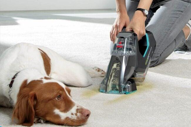 用于宠物选项的最佳地毯清洁剂