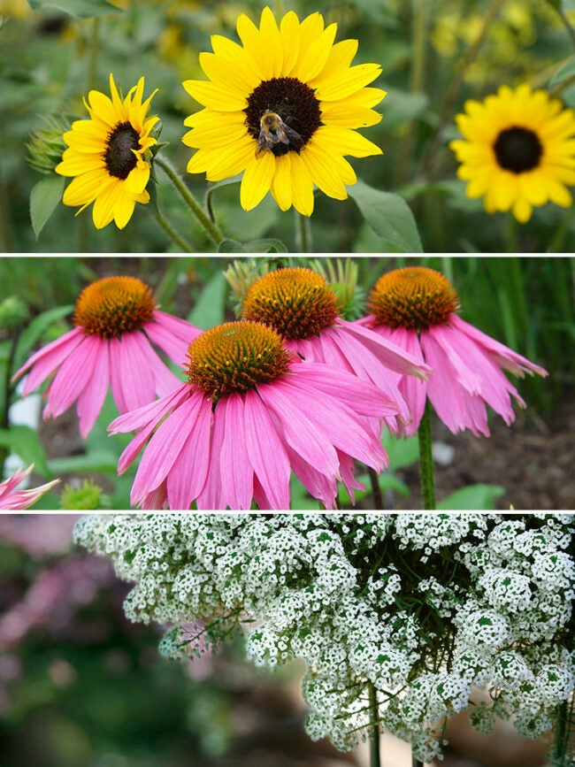 bee friendly pollinator container combination