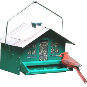 Best Bird Feeder For Cardinals Options: Perky-Pet 8lb Squirrel-Be-Gone