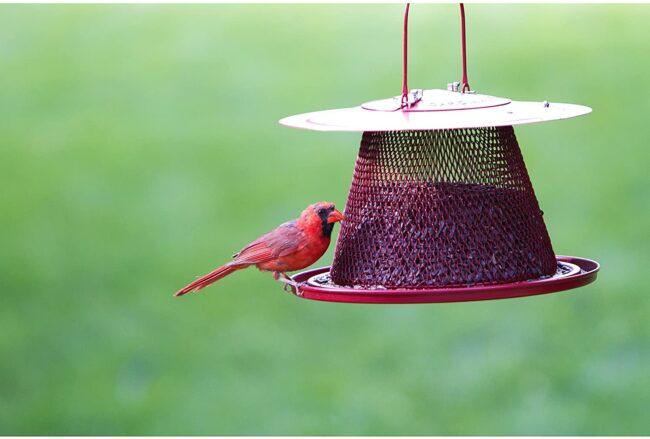 Best Bird Feeder For Cardinals Options