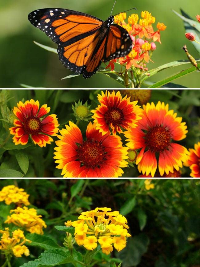butterfly container garden ideas