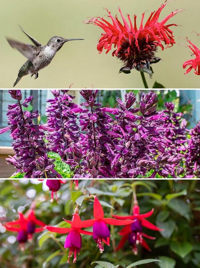 hummingbird container garden