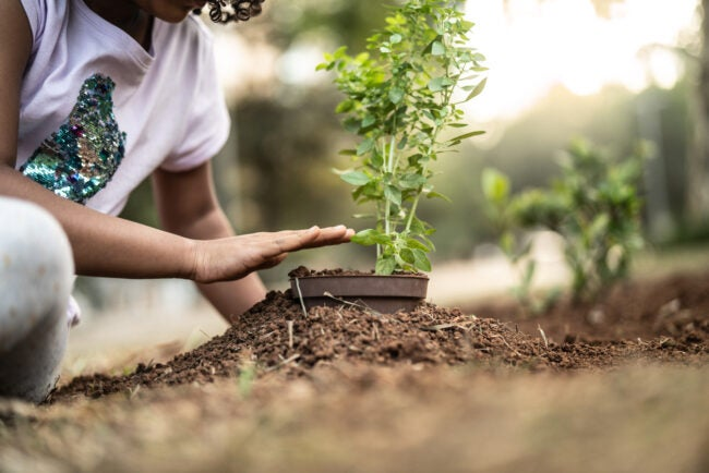 Little Cute Girl planting young tree on black soil as save world concept