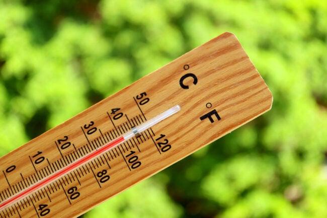 hotter than average summer garden