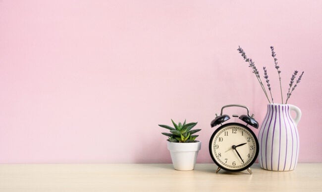 Vintage alarm clock and home plant in white pot on a wooden desk on a pink wall background.