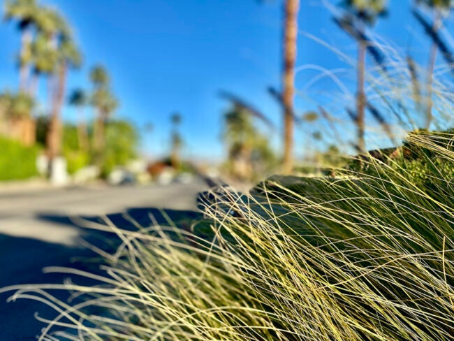 ban on ornamental grasses for water conservation