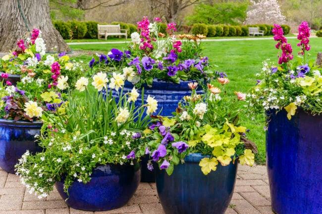 container garden combos for attracting pollinators