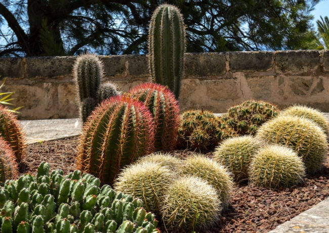 ornamental grass alternatives for desert landscaping