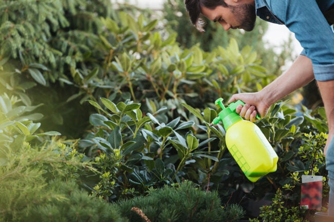 Does Vinegar Kill Weeds Spray Your Weeds