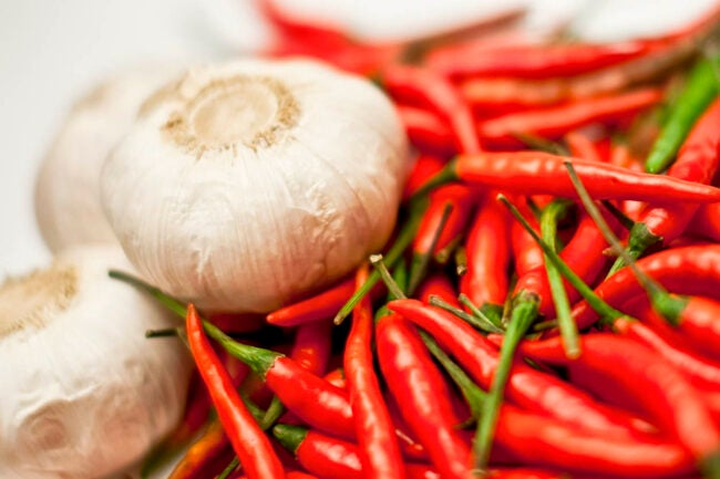 How to Get Rid of Armadillos Use Cayenne or Garlic